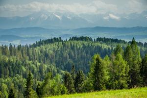 Główny Szlak Beskidzki – Stare Wierchy do Przełęcz Knurowska