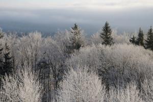 Zieleniec – czyli i w Polsce  jest zima!