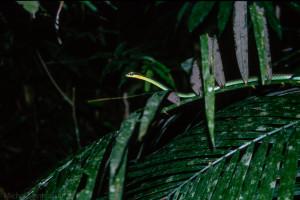 Malezja – Zdjęcia z Parku Narodowego Taman Negara (z roku 2000)