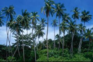 Malezja – Wyspy Perhentian