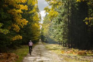 Puszcza Białowieska na rowerze