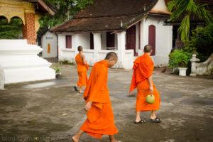 Luang Prabang – mnisi