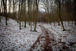 Spacerem po lesie